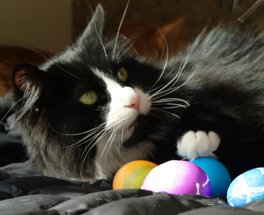 Cosmo face and paw eggs.jpg