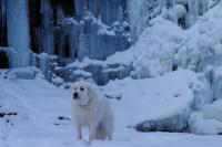 09-01-11 -jackson in front of side of frozen fall - ISO-100 Shutter-80 F-4,3 Focal-50.jpg