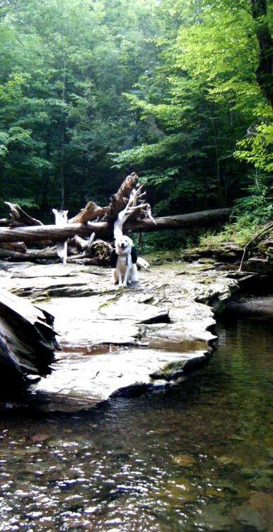 07Jul10 - Hiking Ricketts Glen State Park 02.jpg