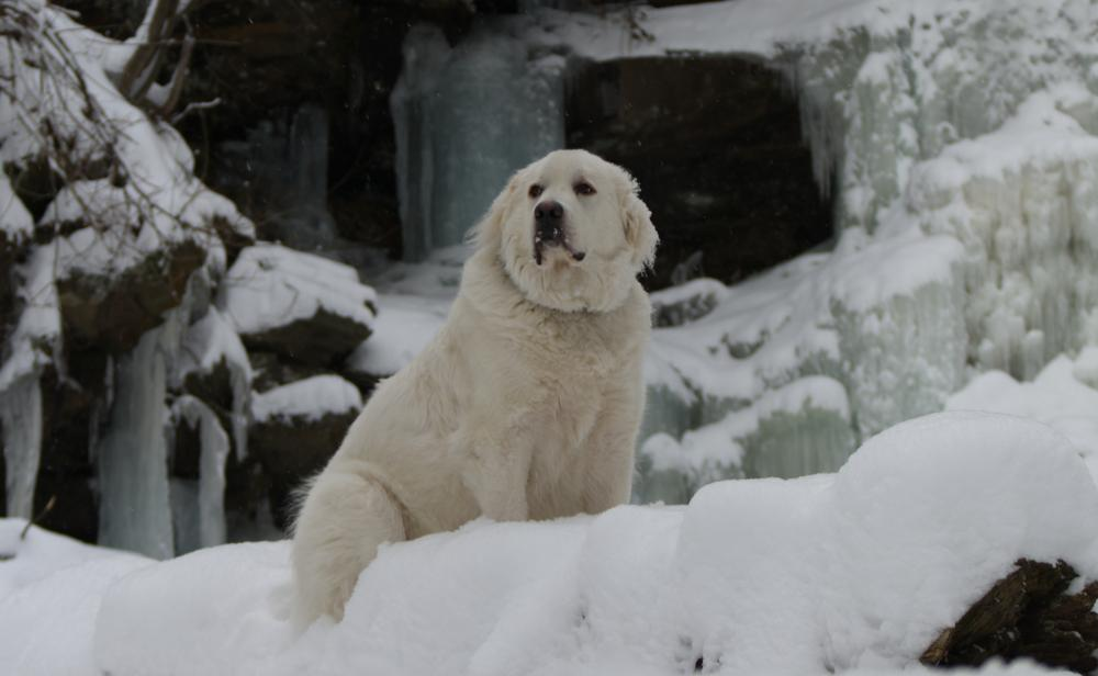 12-01-11 - Jackson sitting to the left of Ganoga Falls frozen in front of icicles - ISO-100 Shutter-80 F-5,0 Focal-50.jpg